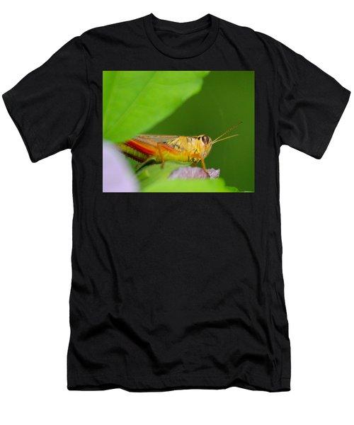 Grasshopper Men's T-Shirt (Athletic Fit)