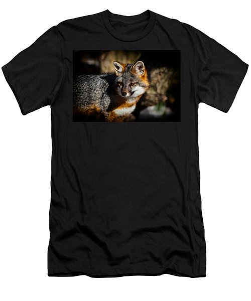 Gray Fox Men's T-Shirt (Athletic Fit)