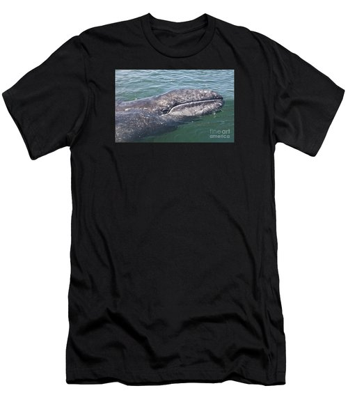 Gray / Grey Whale Eschrichtius Robustus Men's T-Shirt (Athletic Fit)