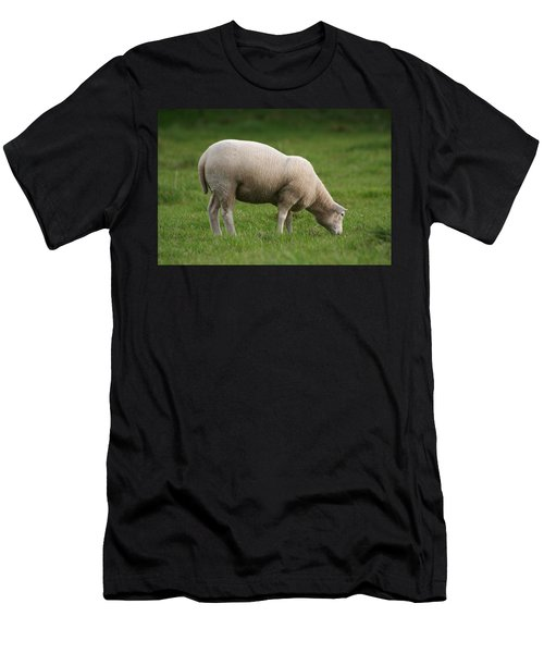 Grazing Sheep Men's T-Shirt (Athletic Fit)