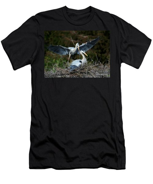 Great Blue Herons Nesting Men's T-Shirt (Athletic Fit)