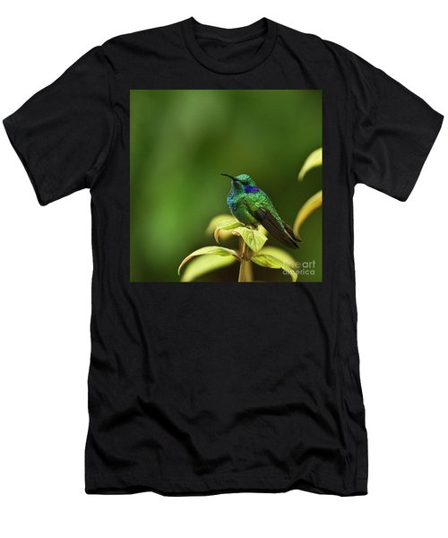 Green Violetear Hummingbird Men's T-Shirt (Athletic Fit)