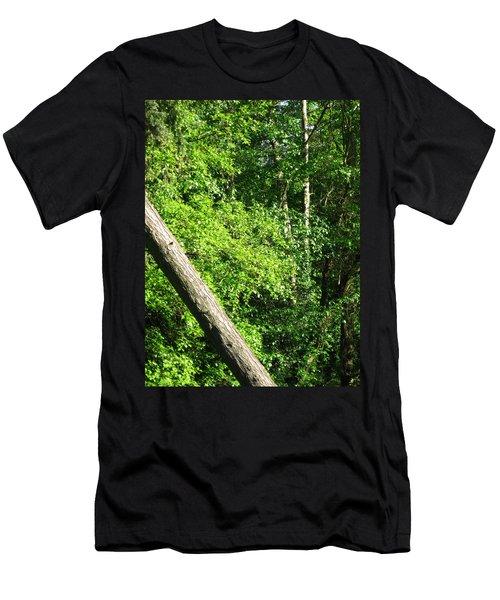 Greenbelt Fall Men's T-Shirt (Slim Fit) by David Trotter
