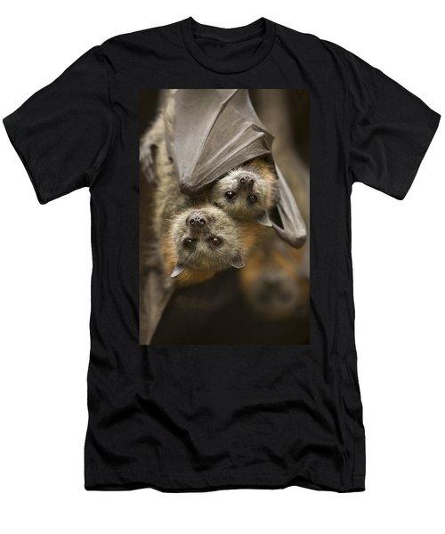 Hang In There Men's T-Shirt (Slim Fit)