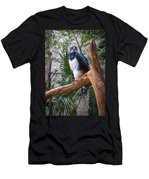 Harpy Eagle Men's T-Shirt (Slim Fit) by Ken Stanback