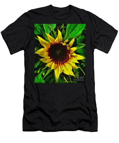 Helianthus Annus - Sunnydays Men's T-Shirt (Athletic Fit)