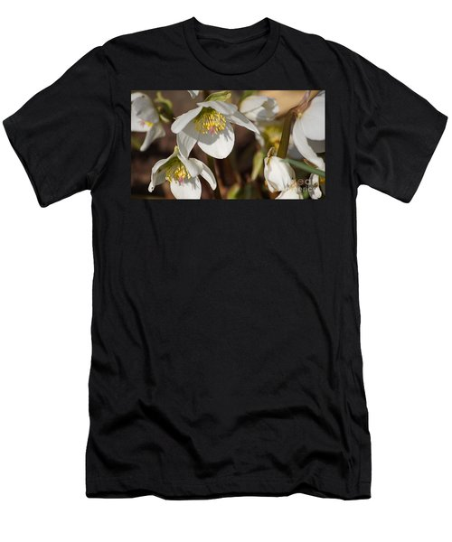 Helleborus Niger - Christrose Men's T-Shirt (Athletic Fit)
