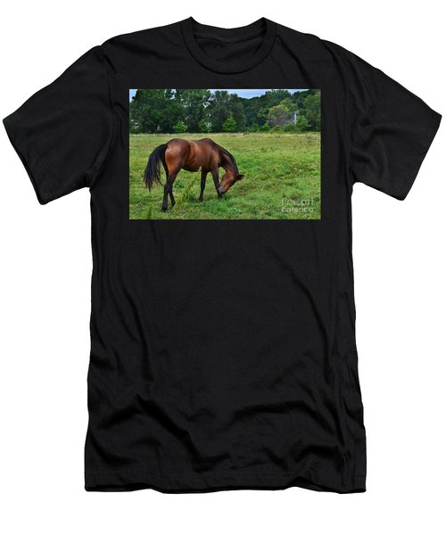 Horse In Holland Michigan Men's T-Shirt (Athletic Fit)