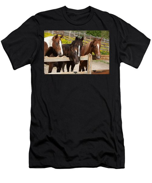 Horses Behind A Fence Men's T-Shirt (Athletic Fit)