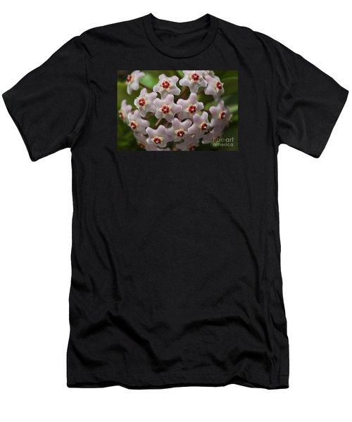 Hoya Waxflower Men's T-Shirt (Athletic Fit)
