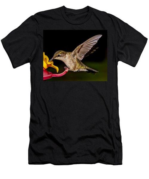 Ruby Throated Hummingbird Men's T-Shirt (Slim Fit) by Brian Caldwell