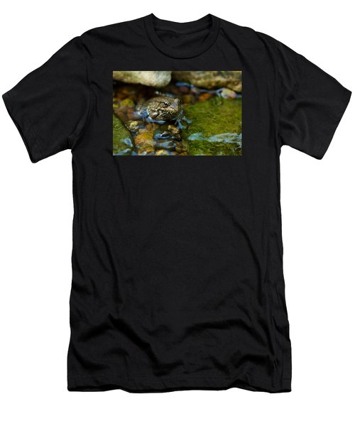 Is There A Prince In There? - Frog On Rocks Men's T-Shirt (Athletic Fit)