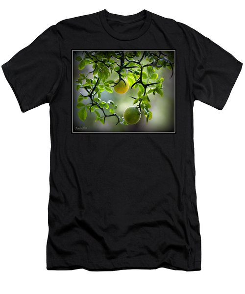 Japanese Orange Tree Men's T-Shirt (Athletic Fit)
