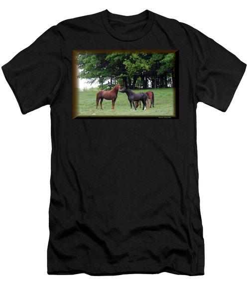 Kissing Cousins- The Paso Fino Stallions Men's T-Shirt (Athletic Fit)