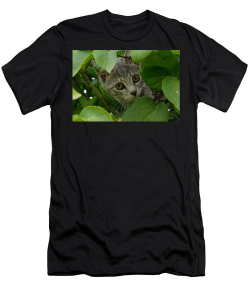 Kitten In The Bushes Men's T-Shirt (Athletic Fit)