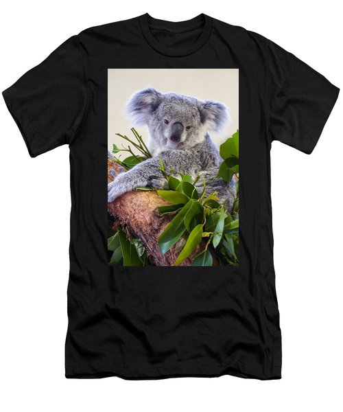 Koala On Top Of A Tree Men's T-Shirt (Athletic Fit)