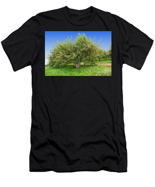Large Apple Tree Men's T-Shirt (Athletic Fit)