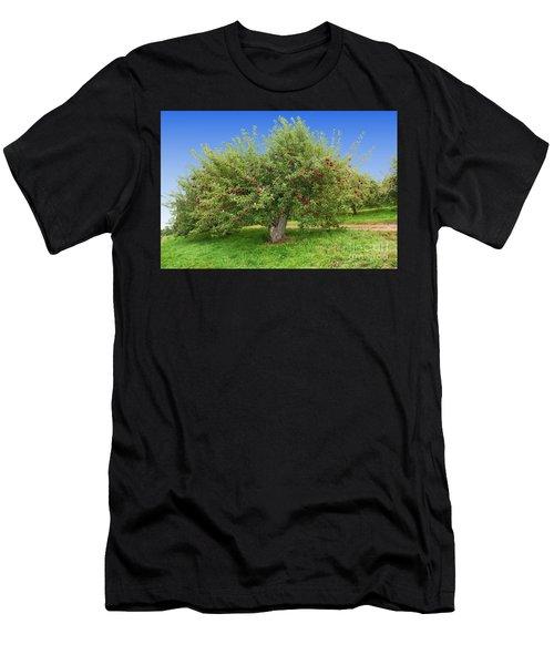Large Apple Tree Men's T-Shirt (Athletic Fit)
