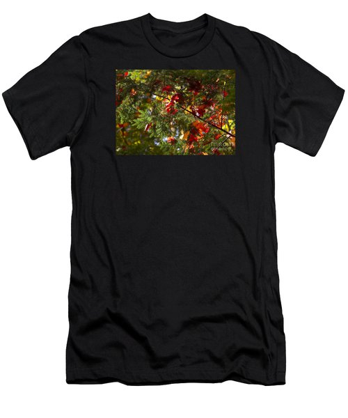 Leaves On Evergreen Men's T-Shirt (Athletic Fit)
