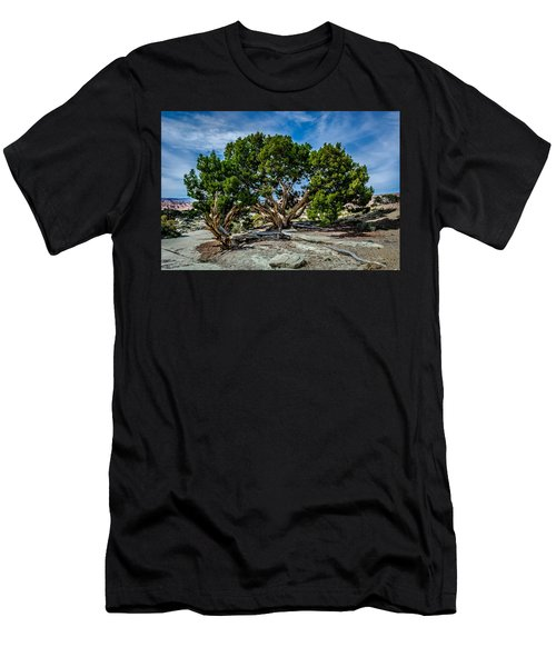 Limber Pine Men's T-Shirt (Athletic Fit)