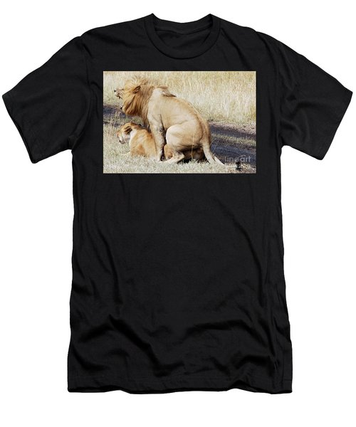 Lions Mating Men's T-Shirt (Athletic Fit)