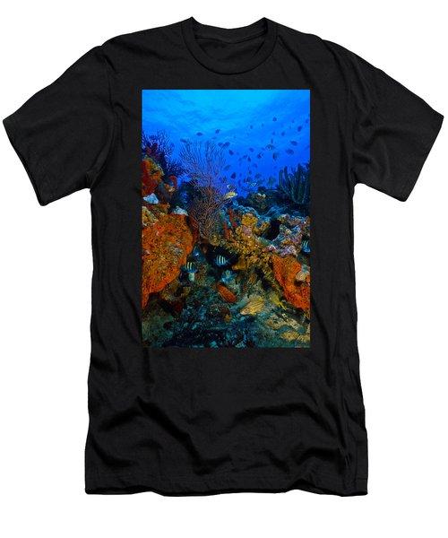 Lynns Reef Men's T-Shirt (Athletic Fit)