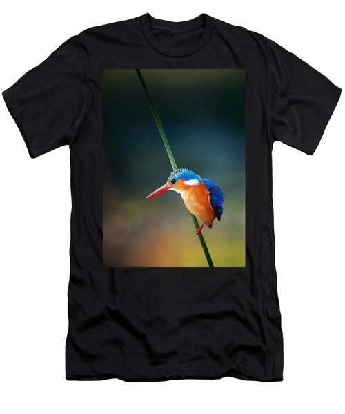 Malachite Kingfisher Men's T-Shirt (Slim Fit) by Johan Swanepoel