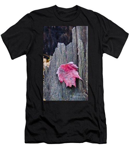 Maple Leaf - Uw Arboretum - Madison Men's T-Shirt (Athletic Fit)