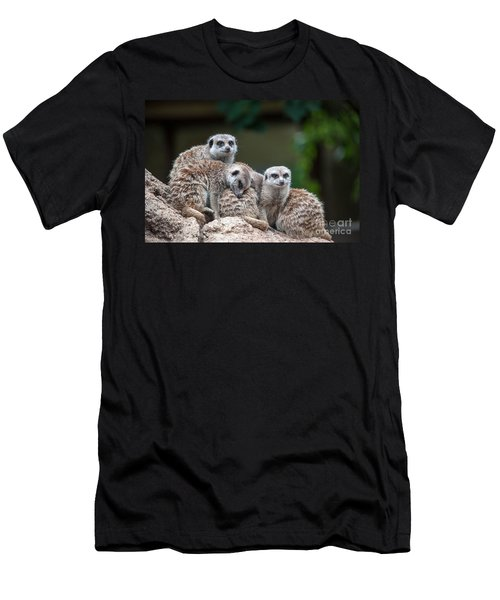 Meerkat Family Men's T-Shirt (Athletic Fit)