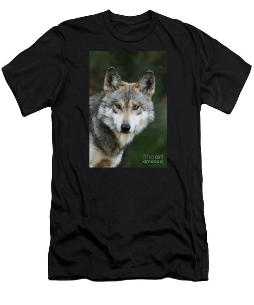 Mexican Wolf #3 Men's T-Shirt (Athletic Fit)