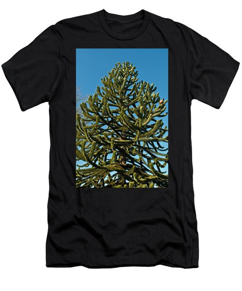 Monkey Puzzle Tree E Men's T-Shirt (Athletic Fit)