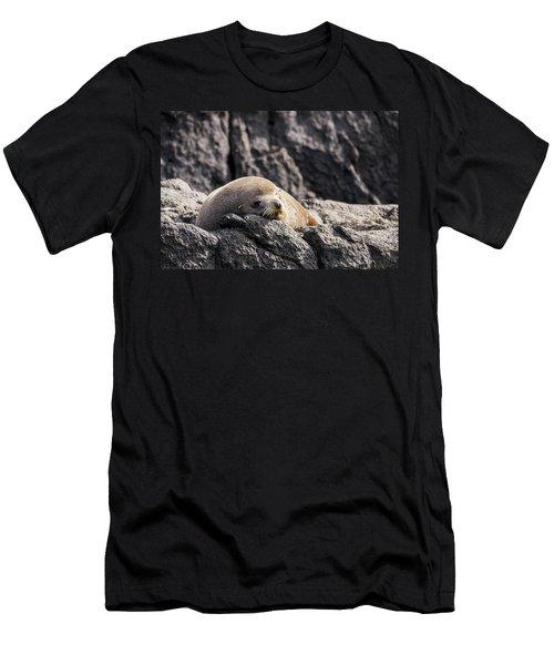 Montague Island Seal Men's T-Shirt (Athletic Fit)