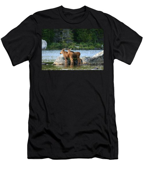 Moose Calves In Maine Men's T-Shirt (Athletic Fit)