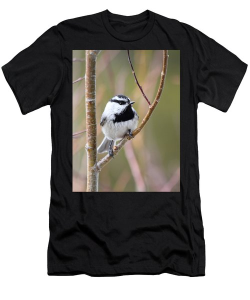 Mountain Chickadee Men's T-Shirt (Athletic Fit)