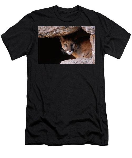 Mountain Lion Peering From Cave Men's T-Shirt (Athletic Fit)