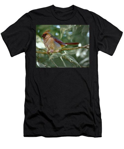 Mrs. Cardinal Men's T-Shirt (Athletic Fit)