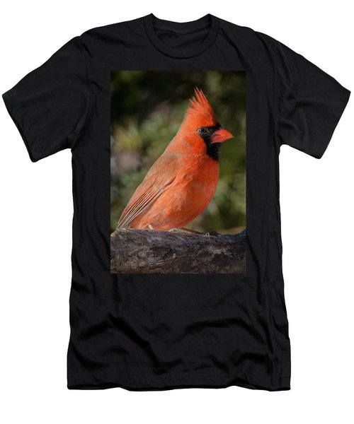 Northern Cardinal 2 Men's T-Shirt (Athletic Fit)
