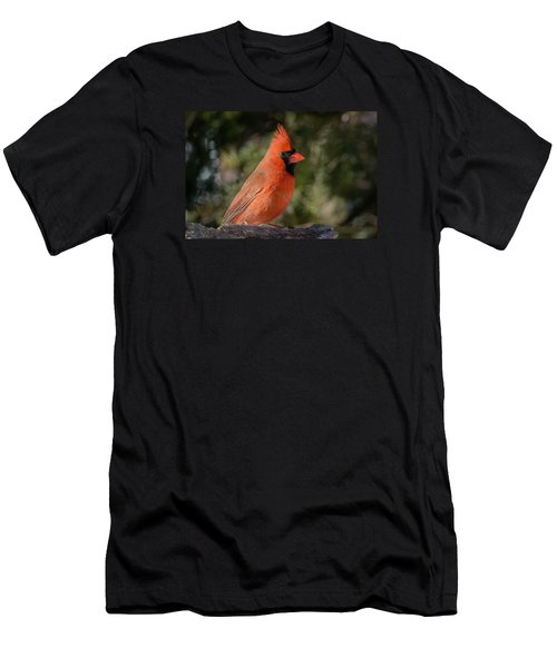 Northern Cardinal Men's T-Shirt (Slim Fit) by Kenneth Cole