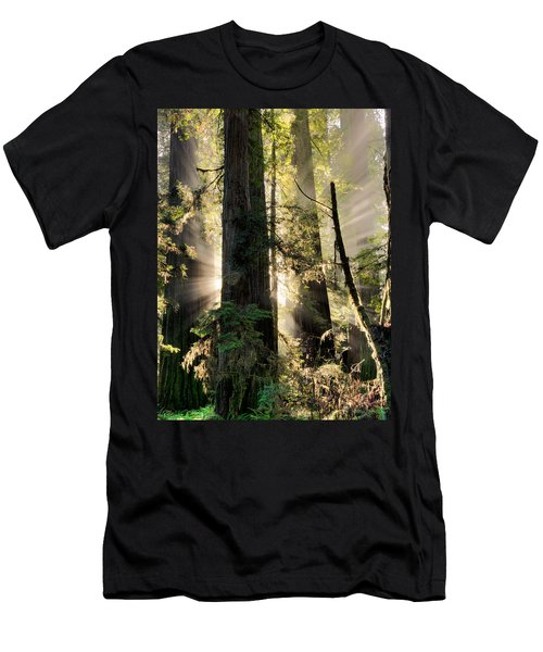 Old Growth Forest Light Men's T-Shirt (Athletic Fit)