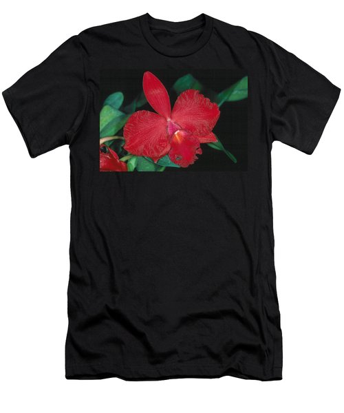 Orchid 12 Men's T-Shirt (Slim Fit) by Andy Shomock