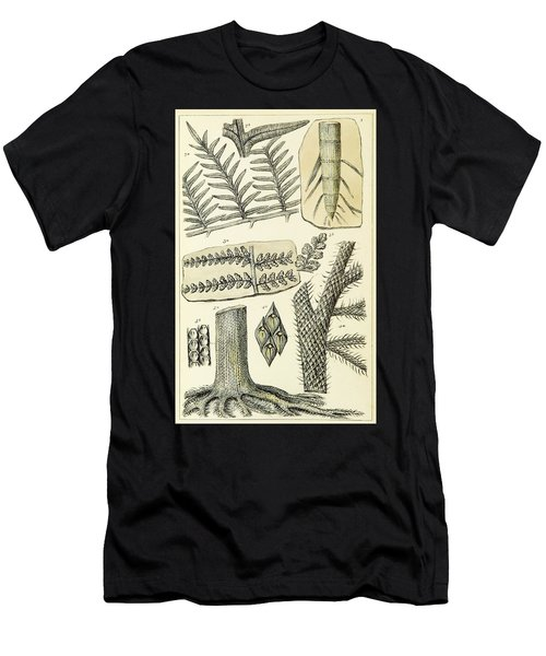 Paleozoic Flora, Calamites, Illustration Men's T-Shirt (Athletic Fit)