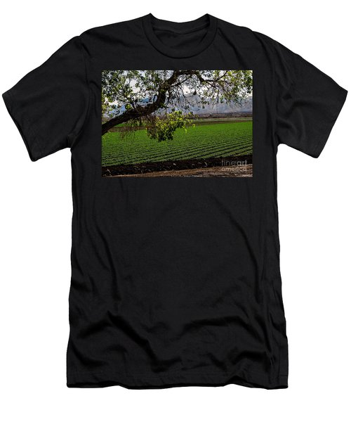 Panoramic Of Winter Lettuce Men's T-Shirt (Slim Fit) by Robert Bales