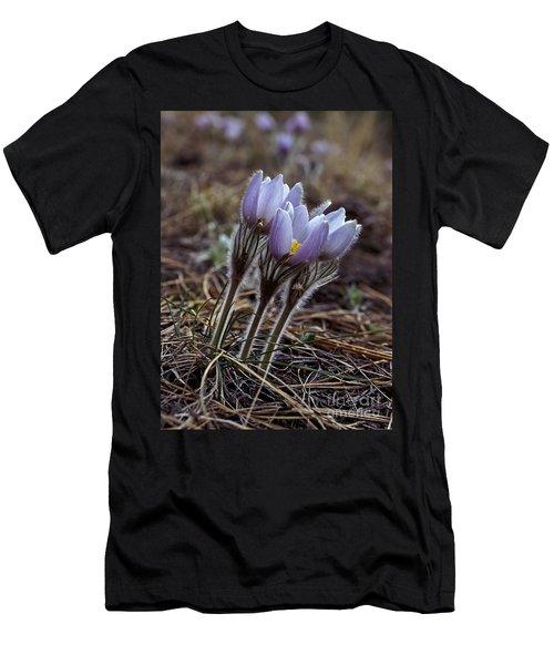 Pasque Flower Men's T-Shirt (Athletic Fit)