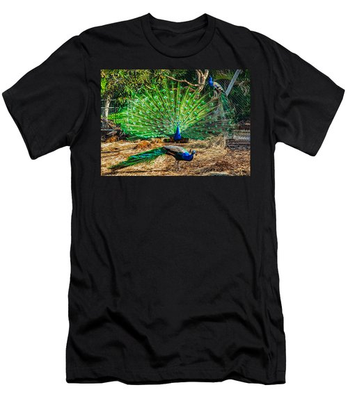 Peacocking Men's T-Shirt (Athletic Fit)