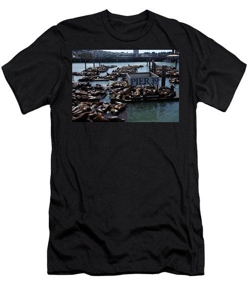 Pier 39 San Francisco Bay Men's T-Shirt (Athletic Fit)