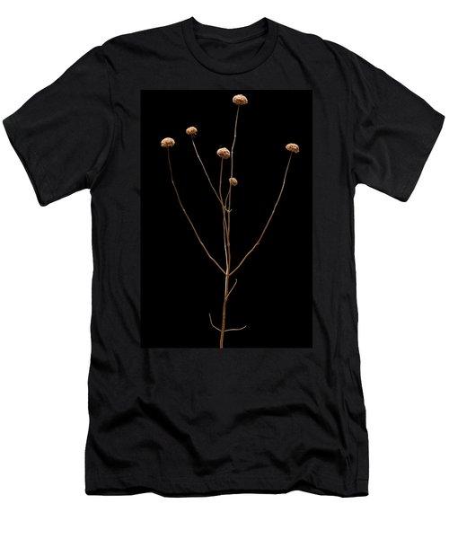 Prairie Rattlesnake Master  Men's T-Shirt (Athletic Fit)