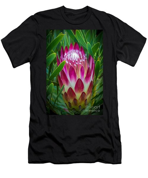Protea In Pink Men's T-Shirt (Athletic Fit)