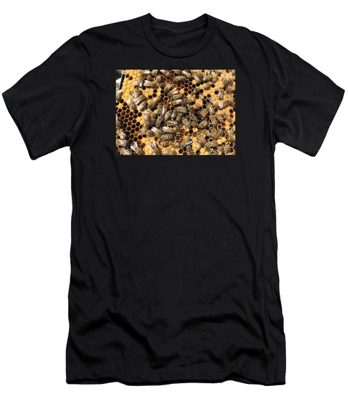 Queen Bee And Her Attendants Men's T-Shirt (Athletic Fit)