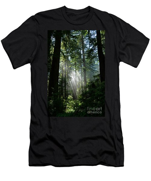 Rays In Redwoods Men's T-Shirt (Athletic Fit)