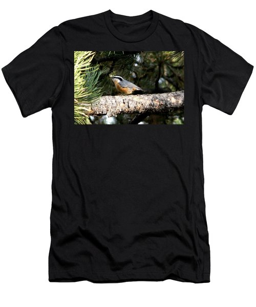 Red-breasted Nuthatch In Pine Tree Men's T-Shirt (Athletic Fit)
